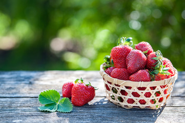 Juicy strawberries in a wicker basket,  wooden table, against the backdrop of a beautiful background green garden. Cooking, food industry, restaurant business, gardening, proper nutrition