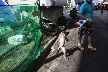 A man offers a monkey, holding a miniature Thai flag, to passersby for a photo taking opportunity in exchange for money, at an anti- government protesters' encampment in Bangkok