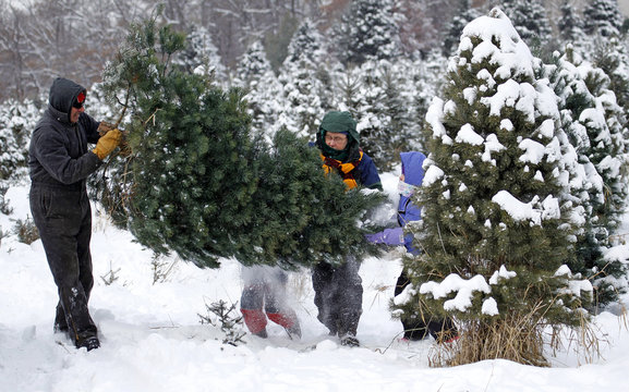 A family carries a tree they have cut for Christmas out of the woods at the Rum River Tree Farm in Anoka