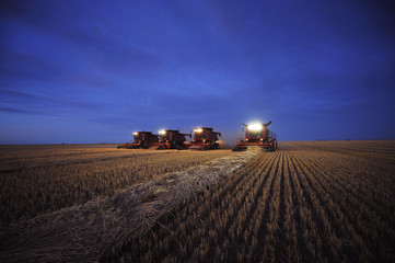 Combines harvest wheat on the Stephen and Brian Vandervalk farm near Fort MacLeod,