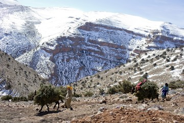 A Berber villager drives a donkey loaded with branches to be used as food for goats near Ait Sghir village in the High Atlas region of Morocco