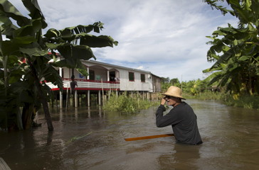 Brazilian farmer Onilton de Oliveira Maciel is seen in his banana plantation which is inundated with floodwaters from the Solimoes River, in the rural municipality of Manacapuru, Amazonas state