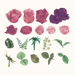 Set Collection of Watercolor Roses Hand Draw Paint Vector