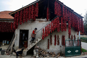 A woman walks up the stairs as bunches of paprika hang on the wall of her house to dry in the village of Donja Lakosnica