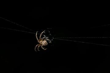 Spider photos close up on black spider webs