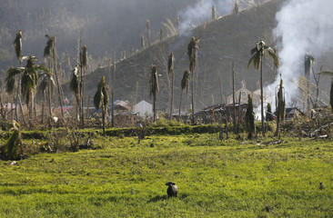 Water buffalo stands in rice field at a mountainous area inaccessible by vehicles west of Tacloban city, in the central Philippines