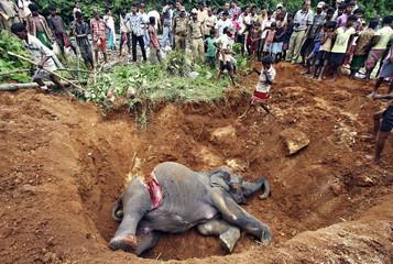 Local villagers prepare to bury the body of a female elephant near Panbari railway station