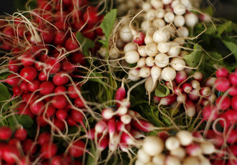 Radishes are bundled for sale after being harvested from the Chino family farm in Rancho Santa Fe, California