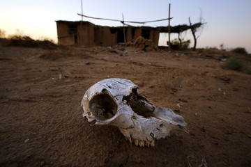 An animal skull lies on the ground at an abandon farm, near the dried up Shiyang river on the outskirts of Minqin town, Gansu province