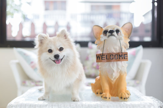 """Pomeranian dog puppy standing on a table with a puppy doll holds """"welcome"""" sign panel in the mouth."""
