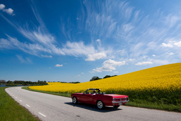 Mustang cabriolet and canola fields