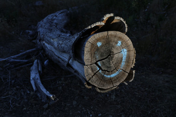 Graffiti marks the stump of a tree felled as part of a plan to remove alien vegetation and reduce fire risks in Cape Town's Table Mountain National Park