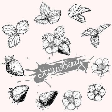 Hand drawn vector illustration set of monochrome strawberry, flower, leaf. sketch. Vector eps 8