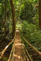 Jungle in tropical spice plantation, Goa, India