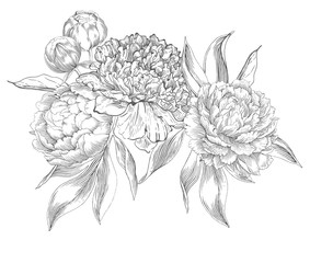 Ink hand drawn illustrations of ornate peonies