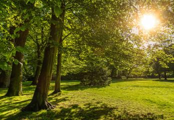 Grüner Park im Frühling bei Gegenlicht