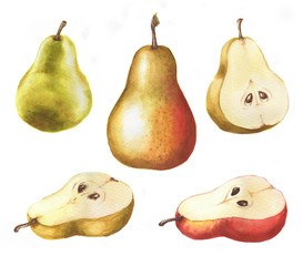 Hand-drawn watercolor isolated illustration set of tasty ripe green, red and yellow pears on the white background.