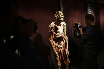 Photographers take pictures of a preserved human body, on display in the exhibition 'Bodies Revealed' in Sofia