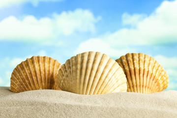 Three shells on the beach