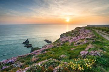 Wall Mural - Wild Flowers on Cornish Cliffs