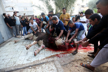 Palestinians slaughter a calf during the Muslim festival of Eid al-Adha in Khan Younis in the southern Gaza Strip