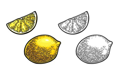 Lemon Slice and whole. Vector black and color vintage engraving