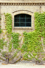 Grape leaves on the walls