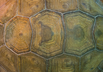 Detailed old big turtle shell pattern