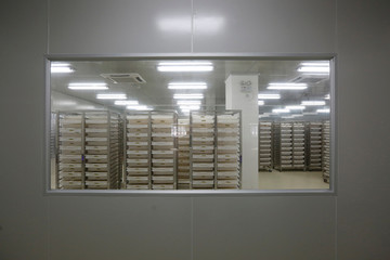 Trays containing mosquito larvae inside Sun Yat-Sen University-Michigan State University Joint Center of Vector Control for Tropical Disease in Guangzhou, China
