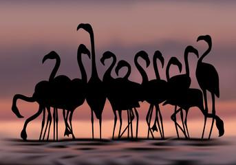 flamand rose - échassier - oiseau - Afrique - sauvage - fleuve - nature - étang