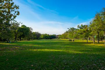 Green meadow field in city park blue sky