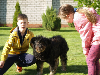 kids petting a dog