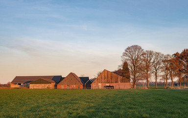 Shed and barns in dutch rural autumn landscape lit by low sunlight.