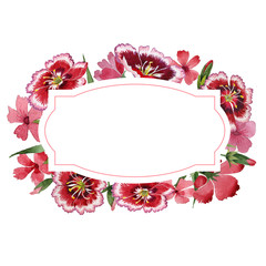 Wildflower carnation flower frame in a watercolor style isolated.