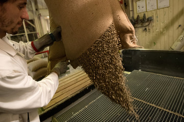 An employee cuts raw coffee bean bags before roasting at the Segafredo Zanetti plant in Sotteville-les-Rouen