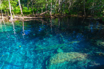Still blue lake in wild tropical forest