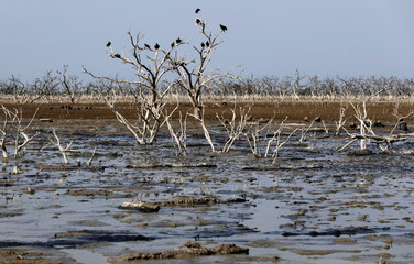 Crows perch on tree branches as alligators are seen stuck in the mud of the dry Pilcomayo river, which is facing its worst drought in almost two decades, in Boqueron