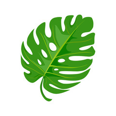 bright tropical leaf isolated on white background