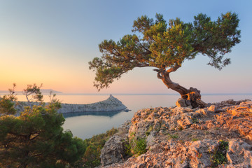 Wall Mural - Amazing tree growing out of the rock at sunrise. Colorful landscape with old tree with green leaves, blue sea, mountains and yellow sky in the morning. Summer travel in Crimea. Nature background
