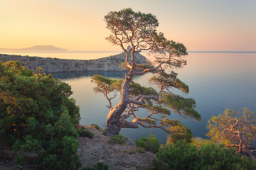 Fototapete - Amazing tree on the mountain at sunrise. Colorful landscape with old tree with green leaves, blue sea, rocks and yellow sky in the morning. Summer forest. Travel in Crimea. Nature background