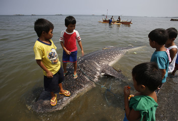 """Children stand on the floating carcass of a juvenile whale shark, known locally as a """"butanding"""", at the coastline of Tanza, Cavite"""