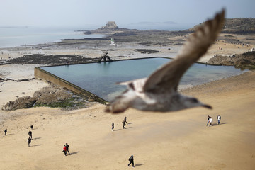 A seagull flies above the beach as visitors make their way across the wet sand during a record low tide in Saint Malo
