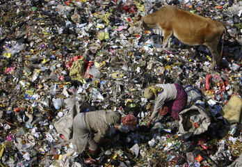 People search for recyclable waste at a dumping site on the bank of Bagmati River in Kathmandu