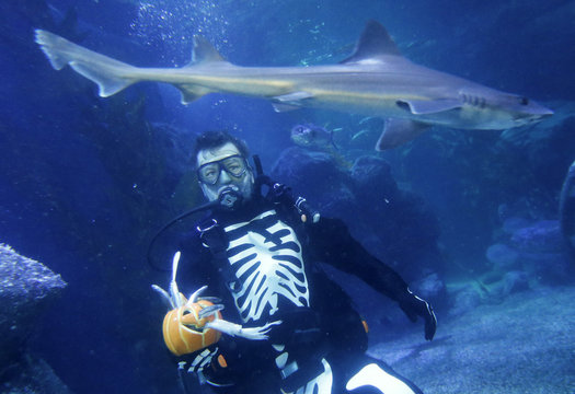 A shark passes by as a diver dressed in a skeleton costume for Halloween feeds fishes inside a fish tank at the Sea Life aquarium in Berlin