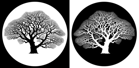 Oak Tree Skeleton - black on white and white on black skeleton silhouette of mature oak tree