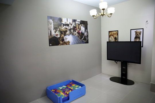 Pet family room is seen at My Second Home, a newly opened luxury pet resort and spa, in Dubai