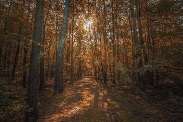 Stiller Wald im Herbst mit schönen warmen Sonnenstrahlen