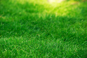 Green lawn grass in rolls