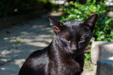 Abandoned crossbreed black cat under sunlight