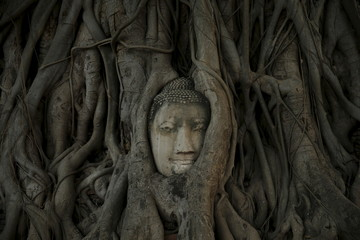 A face of a sculpture of Buddha is seen among a bodhi tree at Wat Mahathat temple in Thailand's ancient capital of Ayutthaya